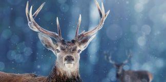 Fact or Fiction: Can Deer See Blaze Orange Camo?