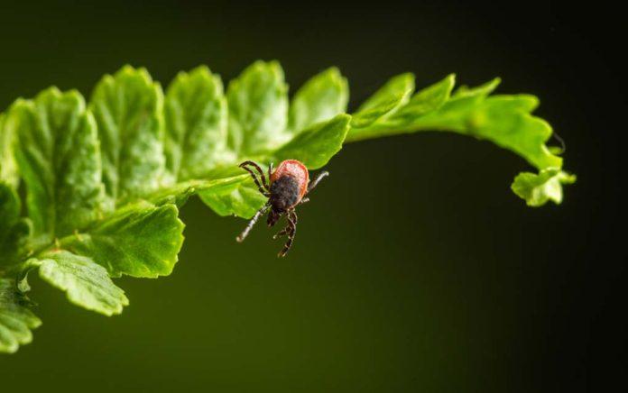 Hunting Tip: Keeping Ticks At Bay