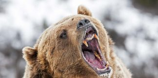 Safety Tips for Bear Country
