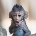 "This Bloodthirsty Pet Isn't ""Monkeying"" Around"