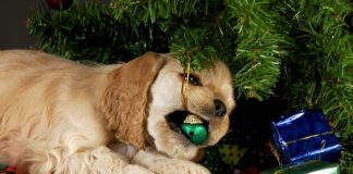 3 Dangers Pet Owners Need to Know Around the Holidays