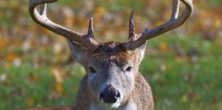 Hunting Tips for End of Season Whitetails