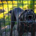 Dogs — Not Always Your Best Defense
