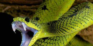Do's & Don'ts of Treating a Snake Bite