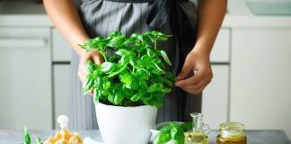 4 Uses for Basil Beyond Cooking