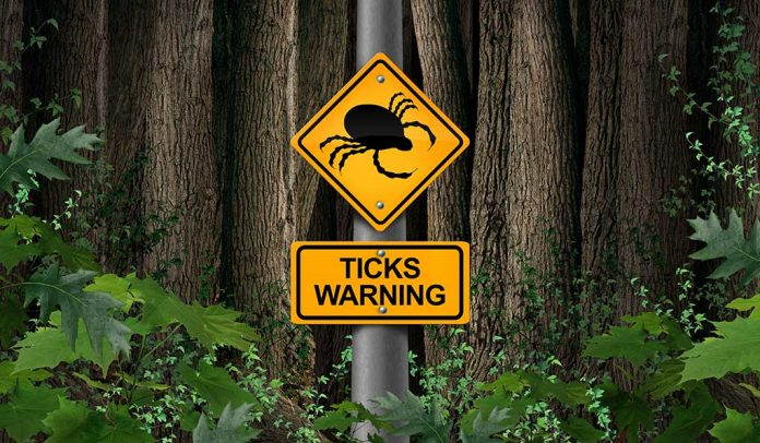 What You Might Not Know About Ticks - And Why it Matters