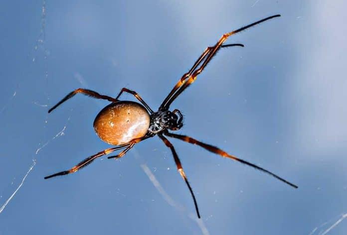 Dangerous Creepy-Crawlies You Should Avoid