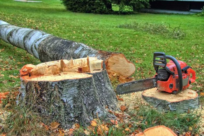 Guide to Safe Tree Felling