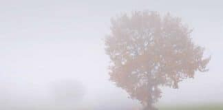 Techniques to Driving Safely in Fog